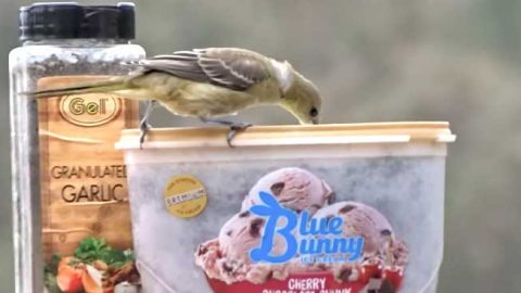 Easy DIY Hummingbird Feeder From Ice Cream Carton | DIY Joy Projects and Crafts Ideas