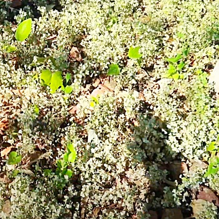 DIY Weed Killer Recipe - How To make Non Toxic Weed Killer - Vinegar Hacks