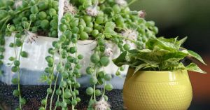 Tips For Replanting Houseplants