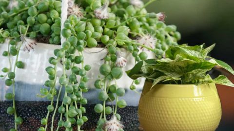 Tips For Replanting Houseplants | DIY Joy Projects and Crafts Ideas