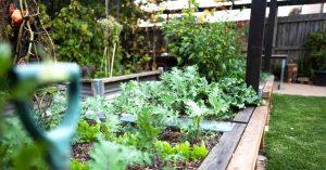 DIY Eggshell Puree For A Healthy Garden