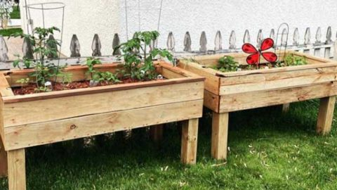 DIY Self Watering Raised Planter Bed   DIY Joy Projects and Crafts Ideas
