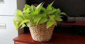 DIY Rope Houseplant Pot