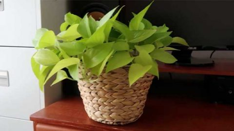 DIY Rope Houseplant Pot   DIY Joy Projects and Crafts Ideas