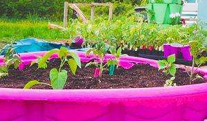 $7 Kiddie Pool Raised Garden