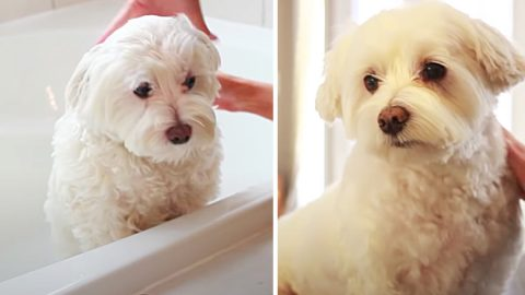 How To Groom A Dog At Home | DIY Joy Projects and Crafts Ideas