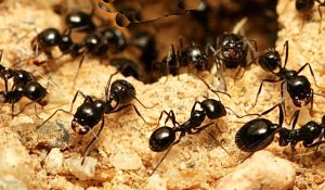 How To Get Rid Of Outdoor Ants