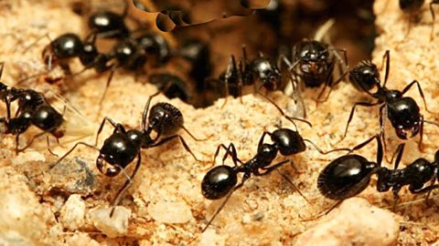 How To Get Rid Of Outdoor Ants | DIY Joy Projects and Crafts Ideas