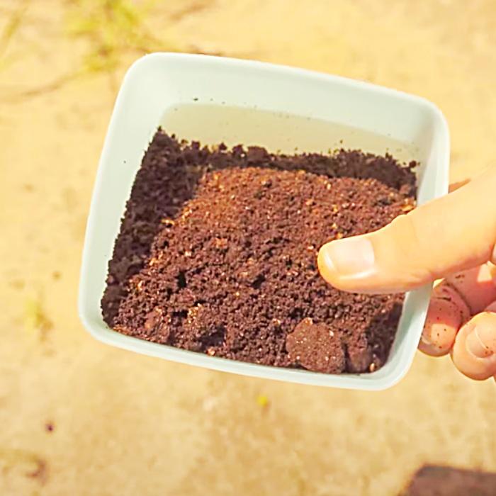 Kill Ants With Sugar And Baking Soda - Easy Way To Kill Ants - Kill Ant With Coffee Grains